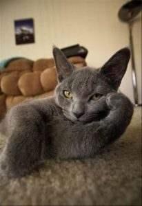 sexy cat