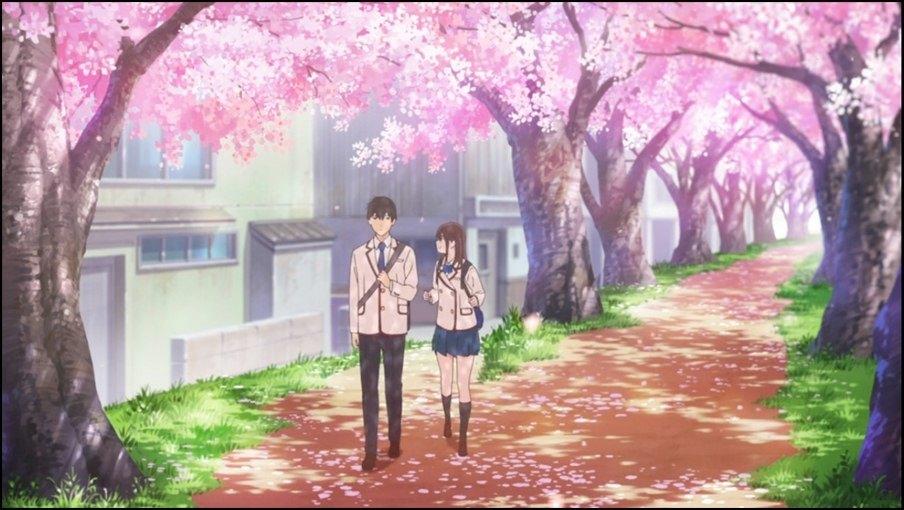 Sakura e Haruki passeggiano sotto i ciliegi in fiore