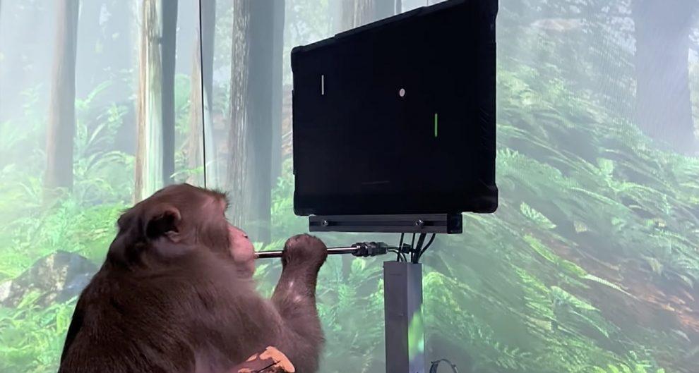 neuralink scimmia 1 titolo