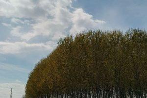 Nokia 5.4 grandangolare campo foresta