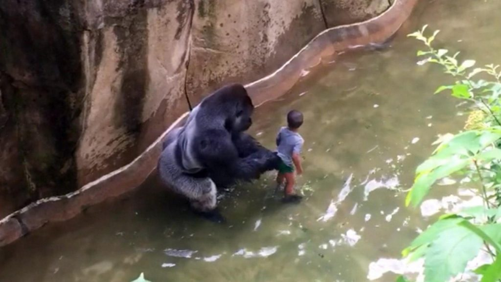 Harambe e il Bambino