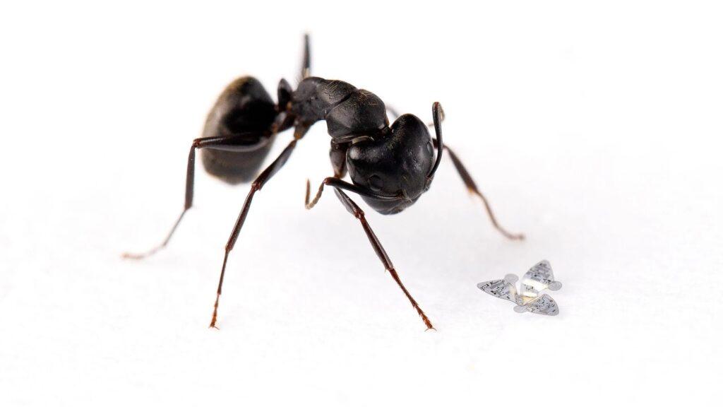Microchip alato volante più piccolo